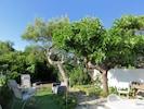 Le jardin, en juin. Le mûrier-platane ombrage la terrasse en été.