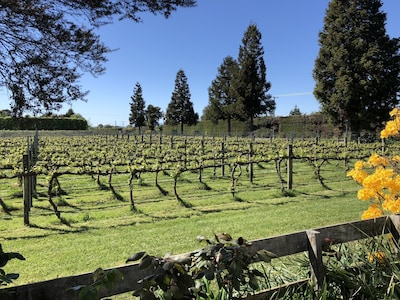 Our vineyard in the Spring