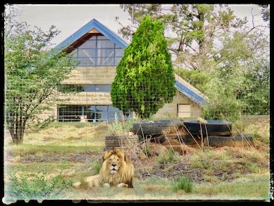 Lion Lodge
