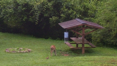 Deer and his Friend Mr Bunny come every day