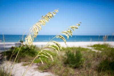 St. Petersburg Municipal Beach, Treasure Island, Florida, United States of America