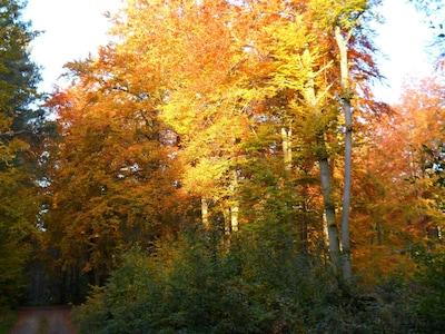 Roland Park, Belgern-Schildau, Saksen, Duitsland