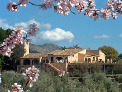 La Asmoladora saison amandiers fleurissants
