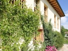 Side of the house, grape vine and geraniums.