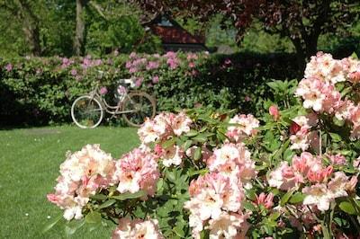 unser Bauerngarten im Mai