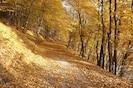 Unser goldener Herbst
