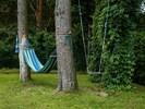 Plant, Tree, Branch, Natural Landscape, Terrestrial Plant, Trunk, Grass, Wood, Shrub