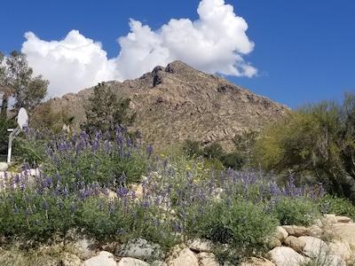 Sunnyslope, Oro Valley, Arizona, United States of America