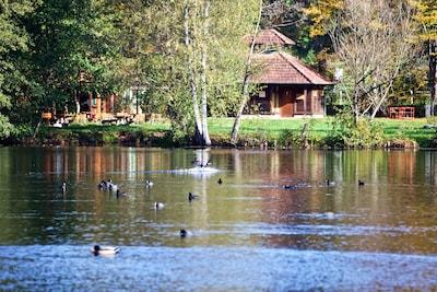 Wasgau - Blick  - Ferienwohnung am Schöntalweiher