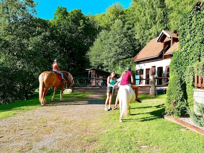Horse, Property, Bridle, Grass, Ranch, Leisure, Recreation, Tree, Equestrianism