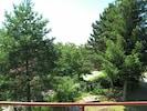 Tree, White Pine, Vegetation, Evergreen, Woody Plant, Plant, Lodgepole Pine, Biome, Red Juniper, American Larch