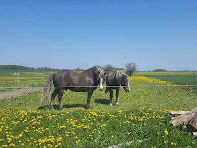 Naturbild mit Pferden