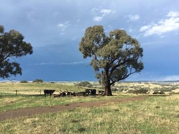 Rural Views And Family Friendly Orange Australia Bedroomvillas Com Au