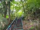 Naturschutzgebiet, Vegetation, Grün, Baum, Natürlichen Umgebung, Wald, Dschungel, Treppe, Walkway, Wald