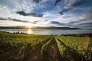Experience the sunrise over Okanagan Lake with a glass of artisan wine