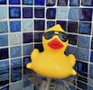 """Elwood takes the pool temp daily.  Our pool is """"warmest on dah island."""""""