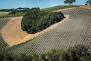 Paso's Iconic Heart Hill at Niner Winery on 46W